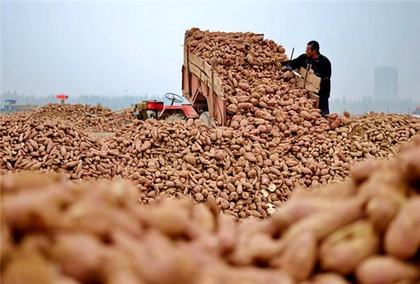 红薯粉条机-红薯