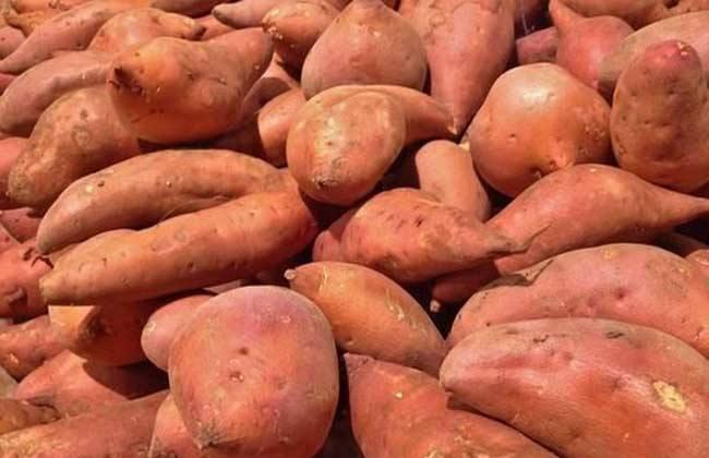 簡易型紅薯淀粉生產線