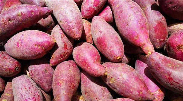 實用型紅薯淀粉生產線
