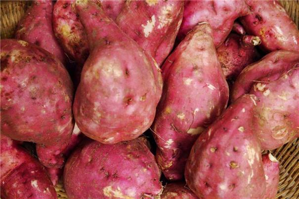<strong>經濟型紅薯淀粉生產線</strong>