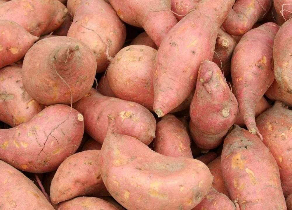 <strong>標準型紅薯淀粉生產線</strong>