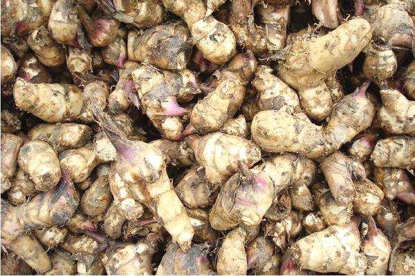 經濟型芭蕉芋淀粉生產線