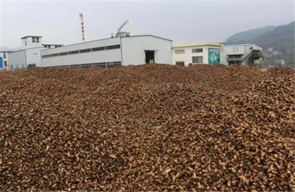 標準型芭蕉芋淀粉生產線
